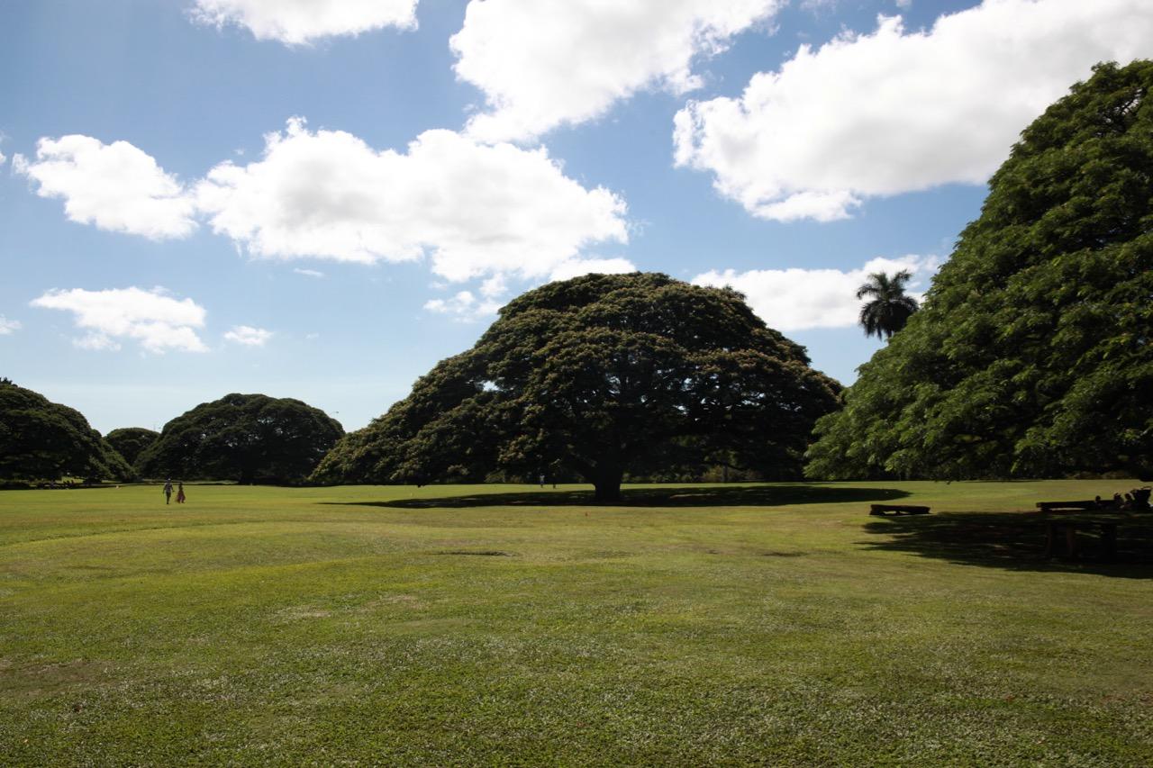 日立の木だらけ