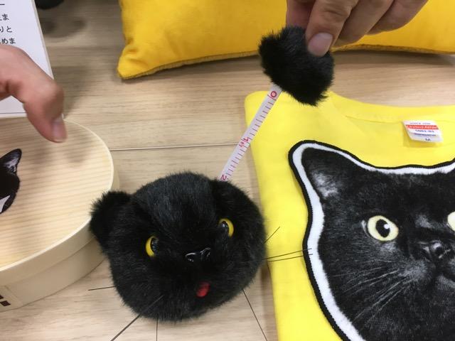 ネコのメジャー