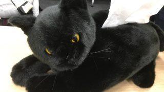 ロフトとクロネコがコラボレーション!あのオレンジと黒のブランドカラーを意識した猫ちゃん商品が続々と登場します!